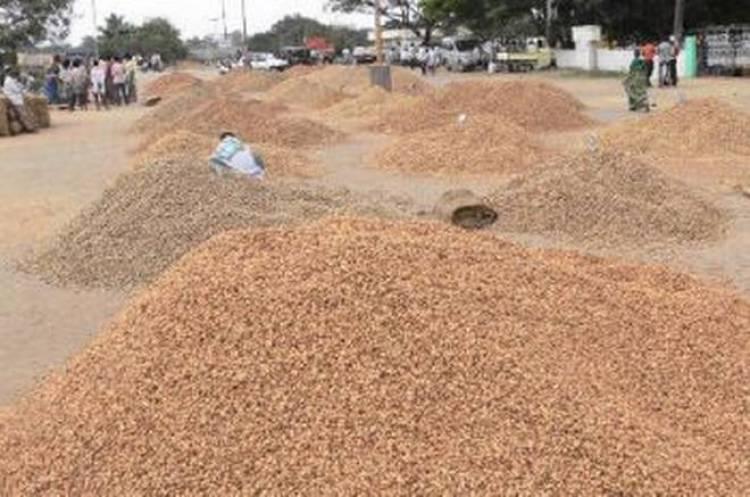 છેતરપીંડી:કલ્યાણપુરના ખેડૂતોએ વેપારીને મગફળી તો વેચી પણ પૈસા ના મળ્યા...