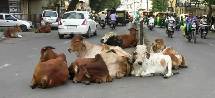 જામનગરના જાગૃત નાગરિકે એસ.પી.ને આ મામલે આપી ફરિયાદ અરજી