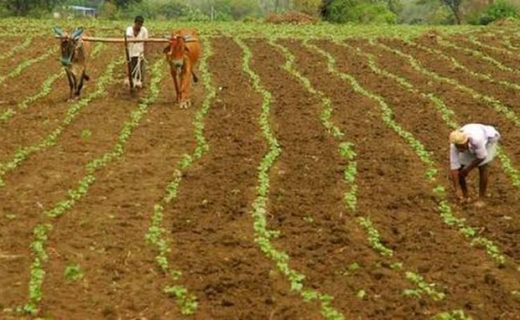 ખેડૂતો માટે રાહતના સમાચાર, 700 કરોડની સહાયની જાહેરાત