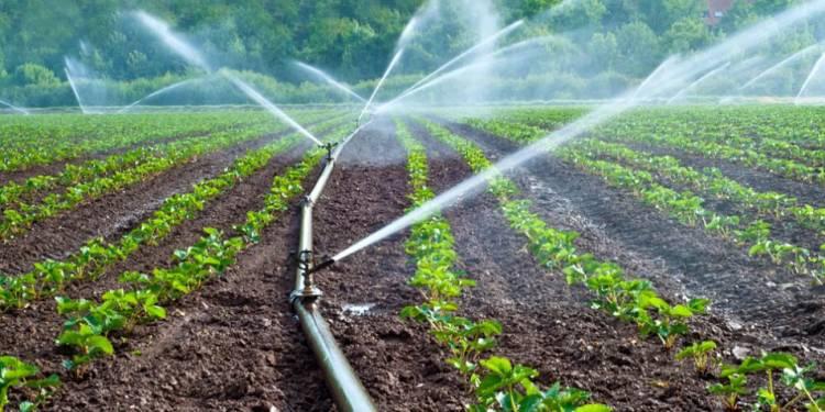 ખેડૂતો નોંધી રાખે આ નંબર, એક SMSથી મળશે ખાસ સુવિધાનો લાભ