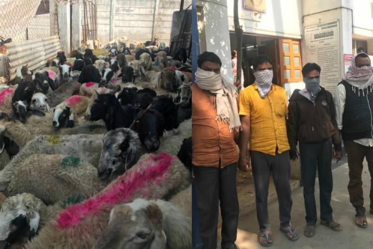 જીવ દયાના નામે બારોબાર ઘેટા-બકરા વેચવાનું કૌભાંડ